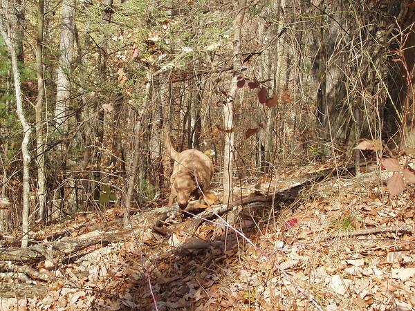Climbin' over logs
