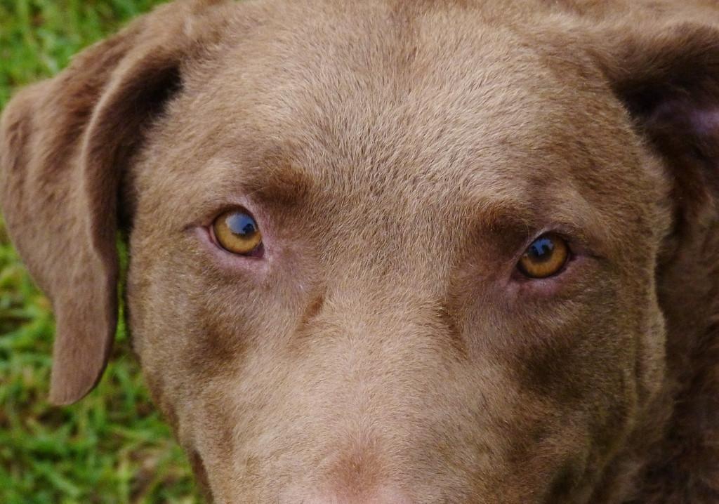 browndog cbr